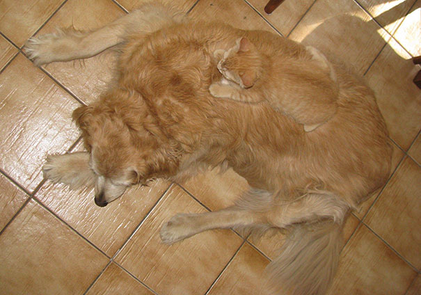Cat And Dog Blend
