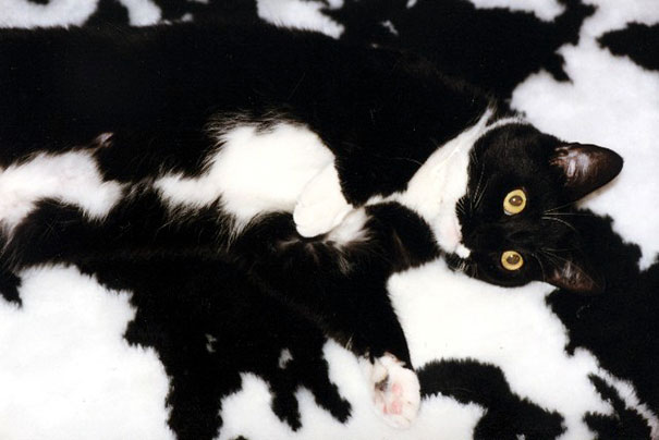Catouflage Pro