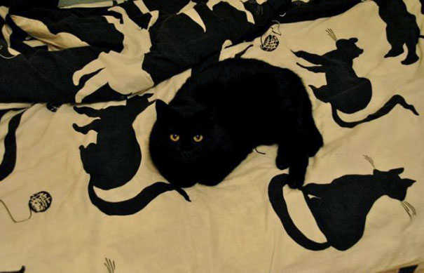 Why Only One Cat Has Eyes On This Print?