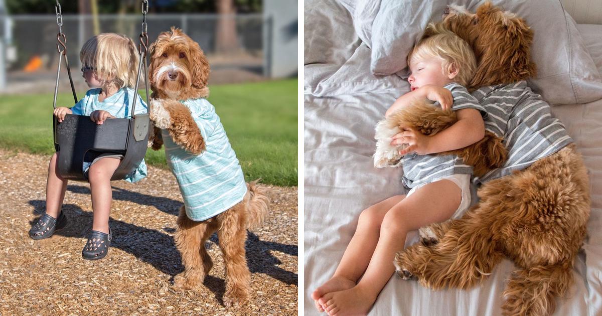 Beste Freunde: Ein kleiner Junge und sein Hund