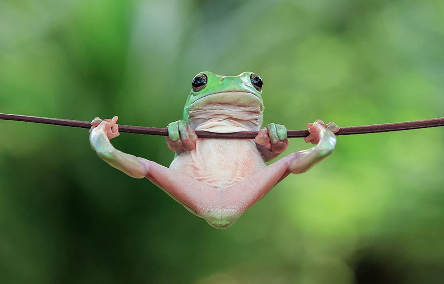 cute frog photography - Images Of Frogs