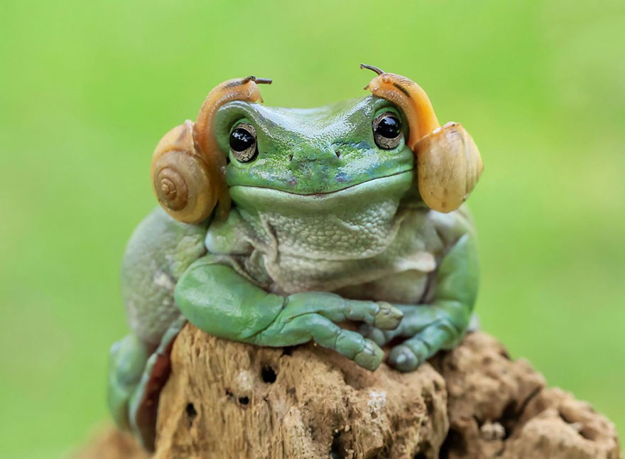 cute frog photography - Picture Of A Frog
