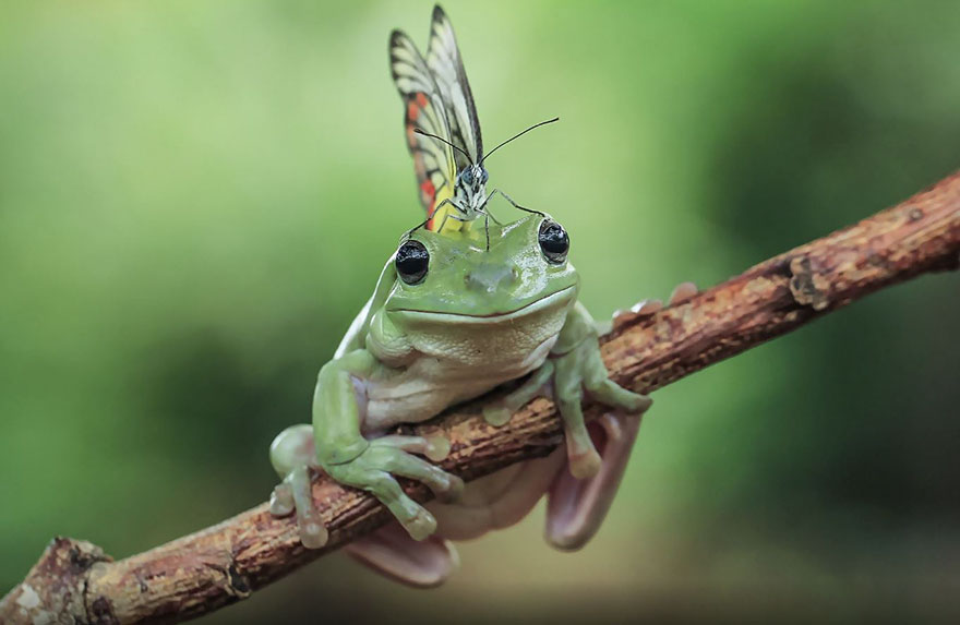 This Photographer Photographs Frogs Like You Ve Never Seen Before 37 Pics Bored Panda
