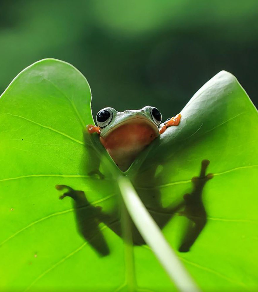 Cute Frog Photography