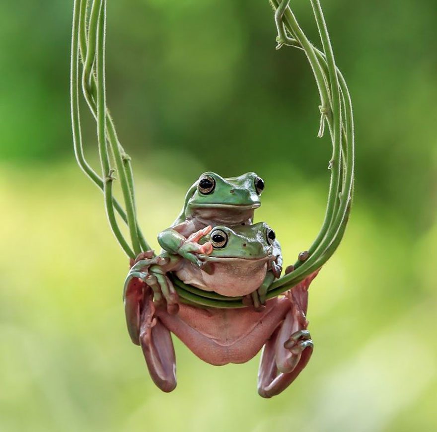 This photographer photographs frogs like you ve never seen before 10 pics bored panda - Funny frog pictures ...