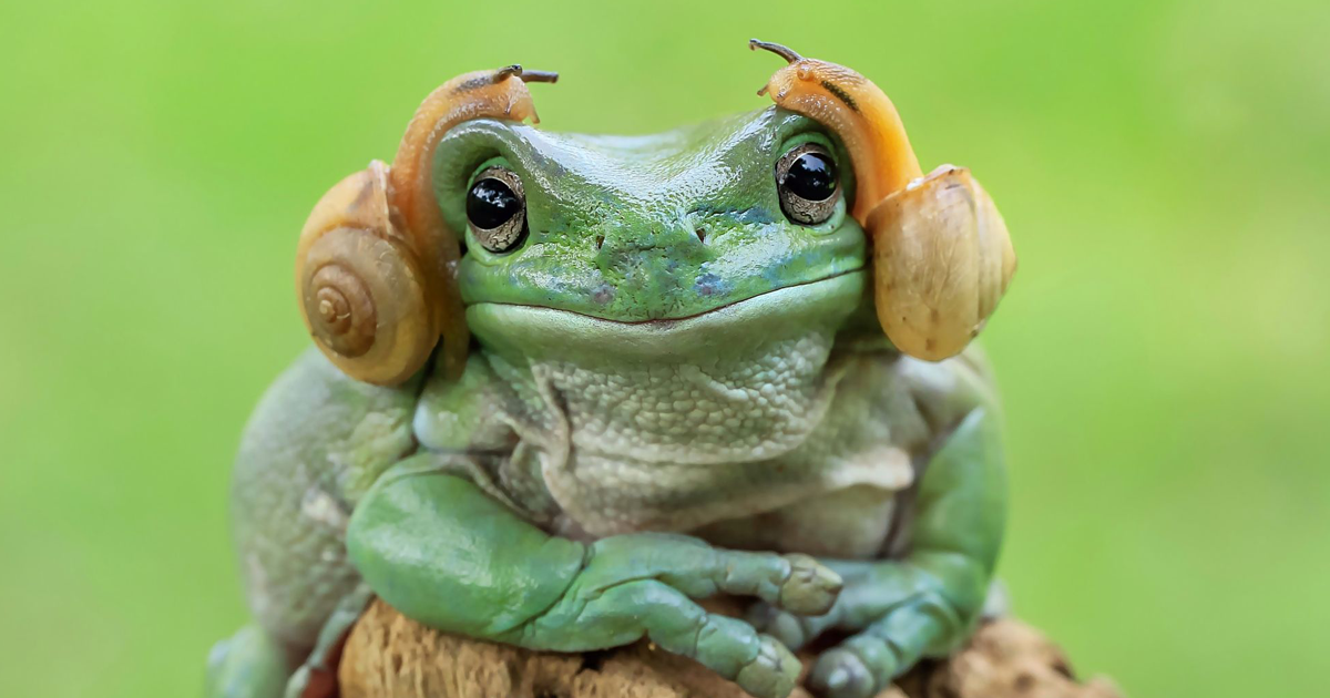 This Photographer Photographs Frogs Like You've Never Seen ...