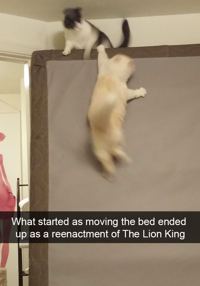 Cat Snap
