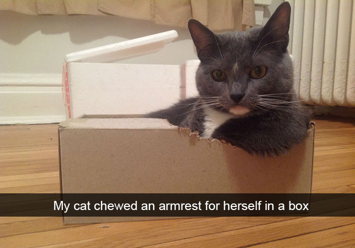 10 hilarious cat snapchats that you need to see right meow bored