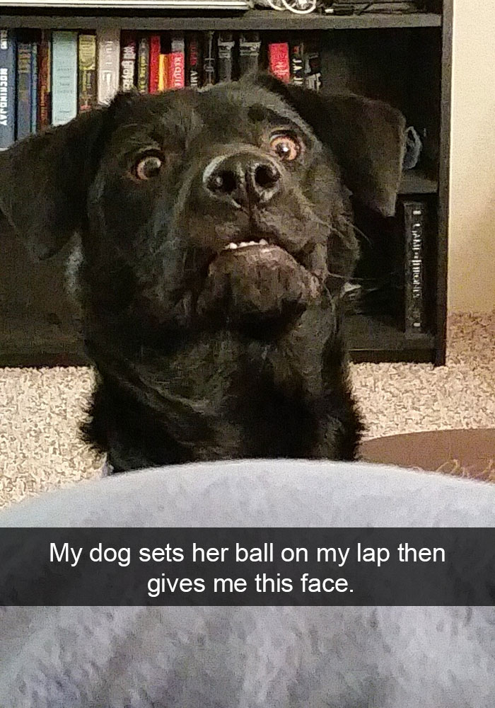 15 Hilarious Dog Snapchats That Are Impawsible Not To Laugh At Bored Panda