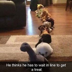 Dog Snaps