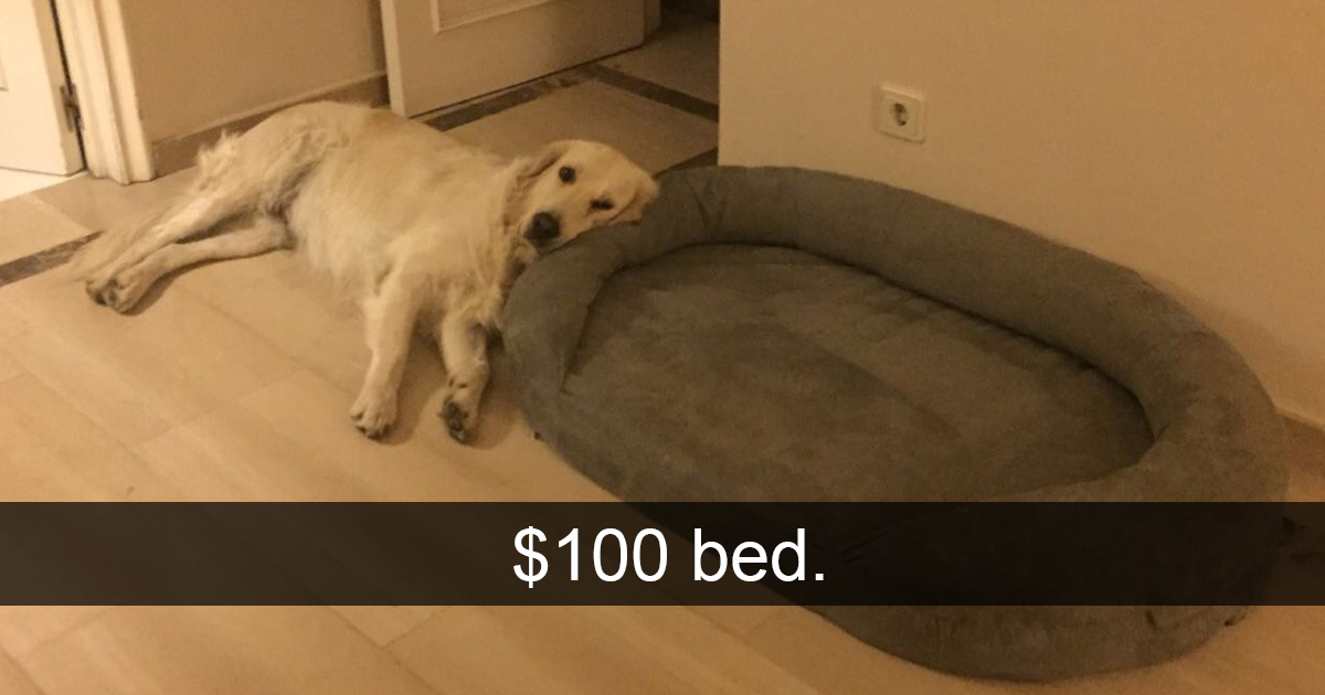 Hilarious Dog Snapchats That Are Impawsible Not To Laugh At - The 29 funniest dog snapchats of all time