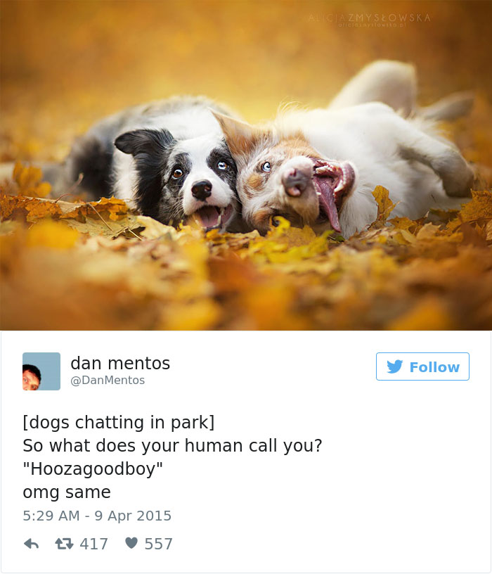Of The Best Dog Tweets Of All Time Bored Panda - 15 hilarious animals whod do anything for your food