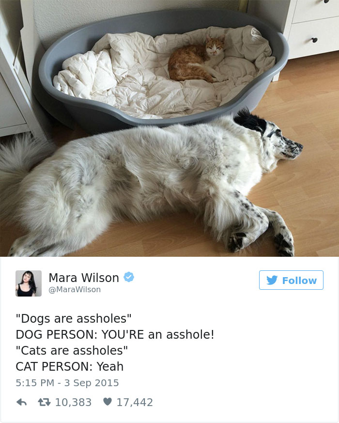 Of The Best Dog Tweets Of All Time Bored Panda - 16 funniest cat tweets 2016
