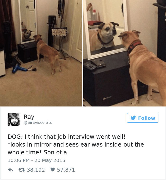 147 Of The Best Dog Tweets Of All Time Bored Panda