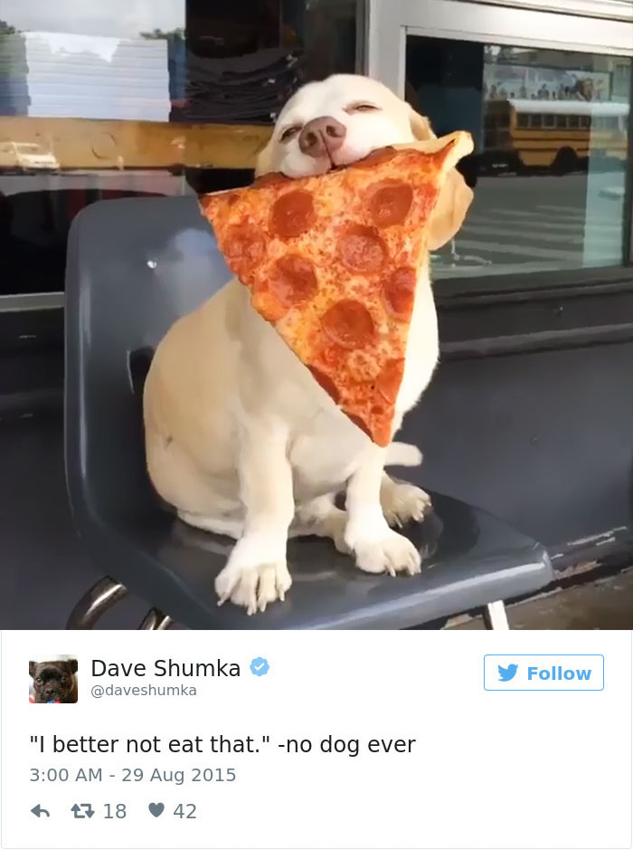 15 Of The Best Dog Tweets Of All Time Bored Panda