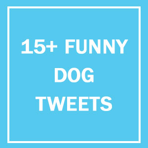 15+ Of The Best Dog Tweets Of All Time