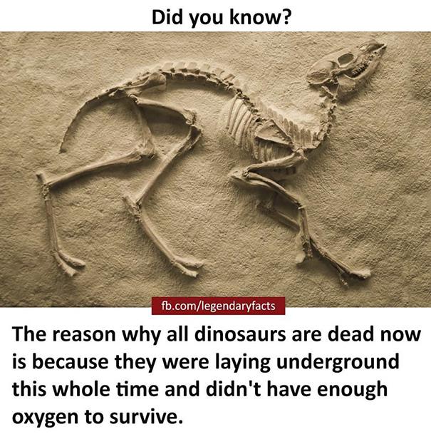 Legendary Fact