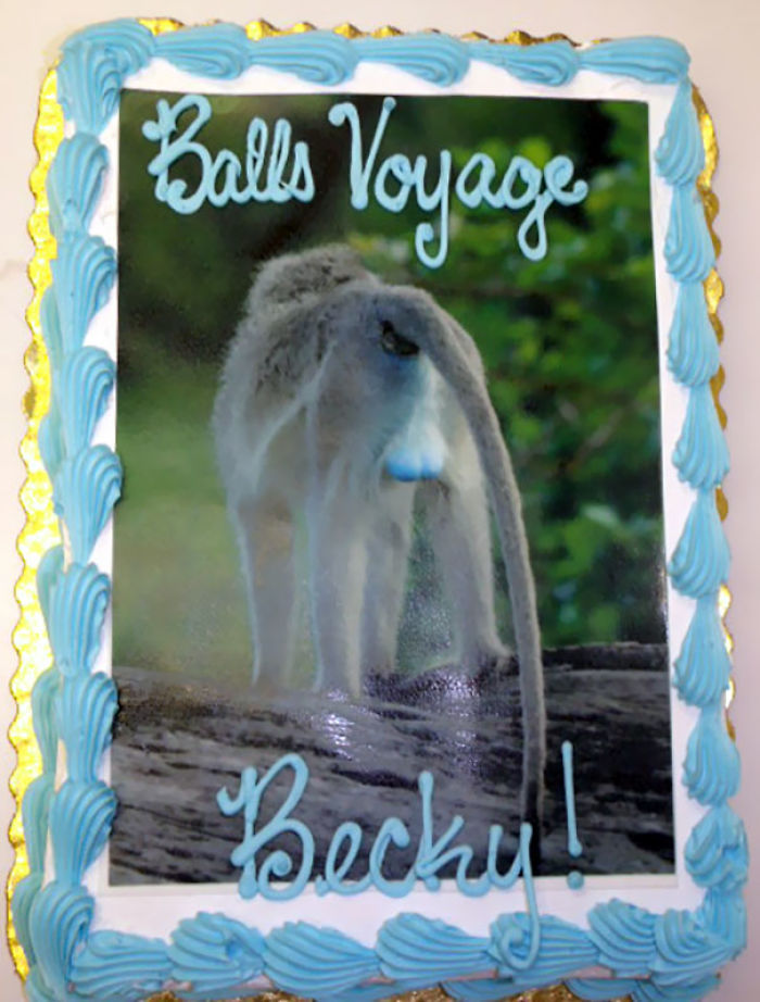 Our Employee Left Us To Take Care Of Monkeys In South Africa, This Was Her Farewell Cake