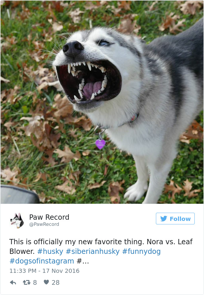 71 of the most hilarious posts about huskies ever