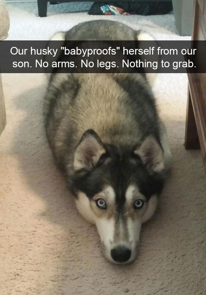 Dog Snapchats Husky Post Bored Panda 71 Of The Most Hilarious Posts About Huskies Ever Bored Panda