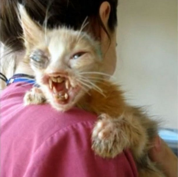girl-saves-disfigured-cat-istanbul-011