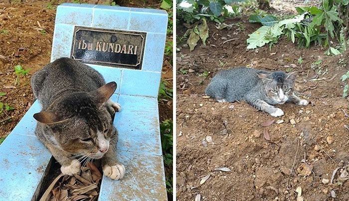 Heartbroken Cat Has Spent 1 Year By Her Dead Owner's Grave