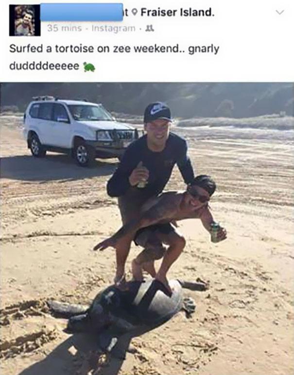 guys-surf-turtle-20000-fine-1b