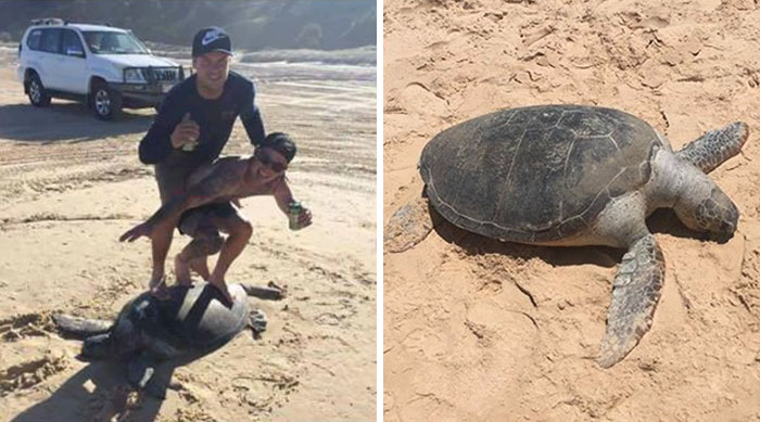 Idiots Face $20,000 Fine After 'Surfing' On Turtle And Posting It Online