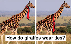 People Can't Agree Whether Giraffes Wear Their Ties At The Top Or Bottom, And The Answers Are Hilarious