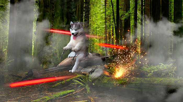 Wow. Much Speed. Very Pew