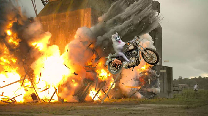 Cool Dogs Don't Look At Explosions!