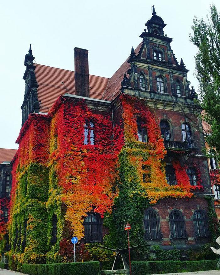 national-museum-autumn-anna-kowalow-wroclaw-poland-1a