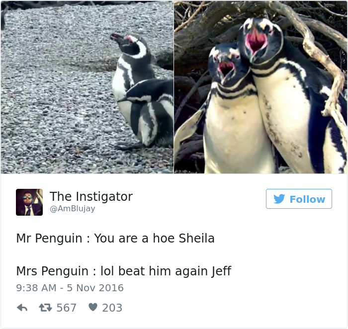 penguin-fights-homewrecker-cheating-wife-16