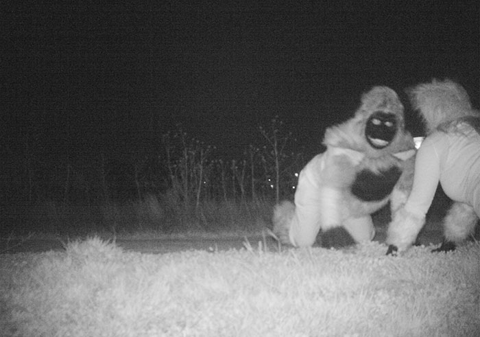 police-camera-find-mountain-lion-kansas-2
