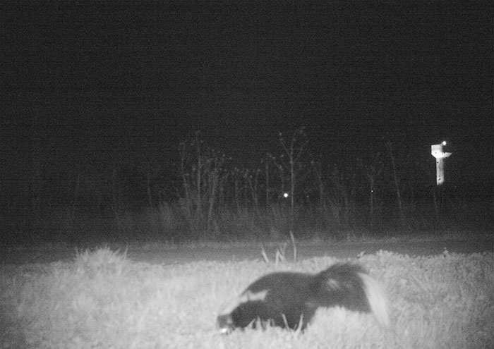 police-camera-find-mountain-lion-kansas-5