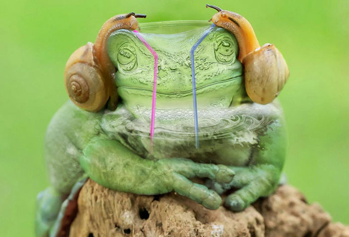 Waiter, Another Green Frog Over Here Please