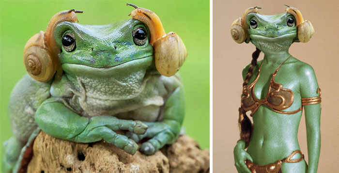 Frog That Looks Like Princess Leia Sparks Photoshop Battle, And The Results Are Hilarious