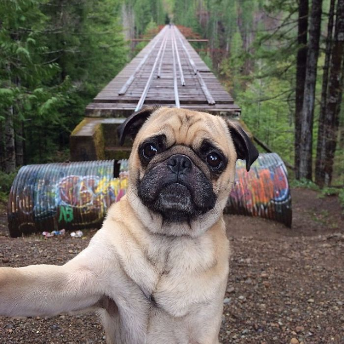 amasado aventuras