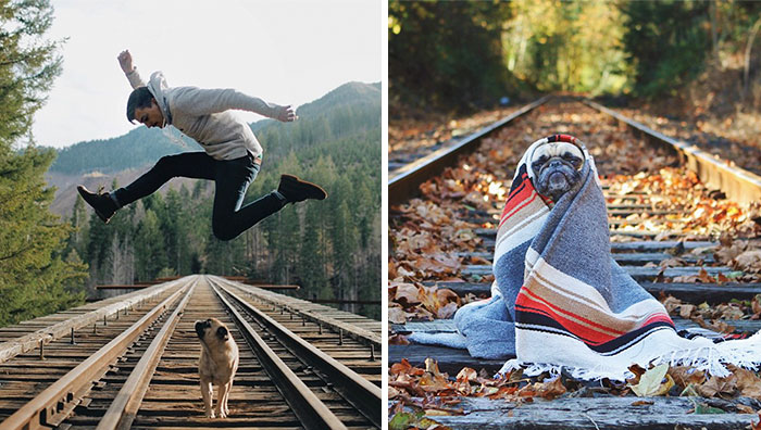 Owner Takes His Pug On Epic Adventures (147 Pics)