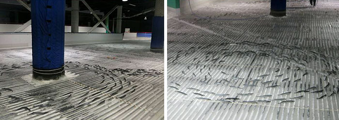 skating-rink-freeze-fish-ice-japan-2