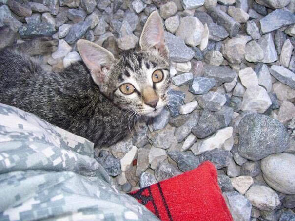 soldier-refuses-leaving-special-needs-kitten-afghanistan-2