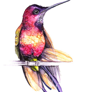 I Watercolor Birds To Express How Much I Love Them