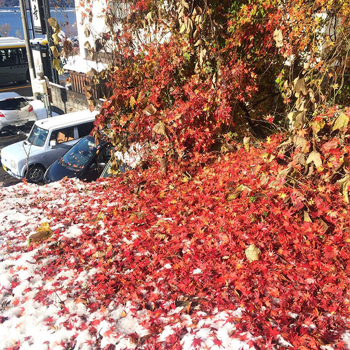 Tokyo First Snow In November 2016