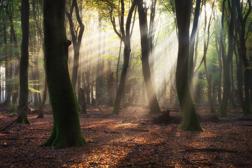 10+ Photos That Reveal The Magic Of Dutch Forests