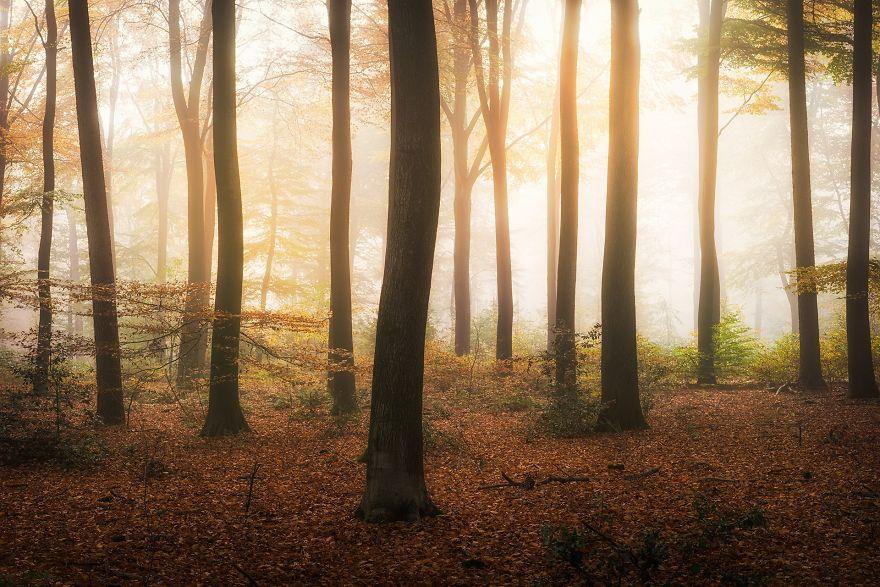 Enchanted Trees