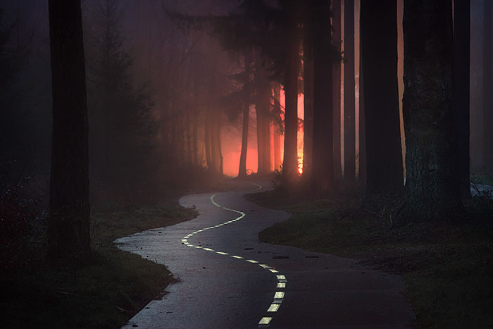 23 Photos That Reveal The Magic Of Dutch Forests