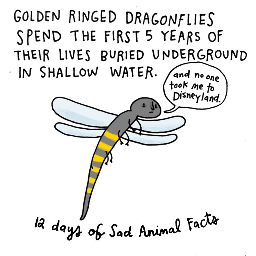 On The Fifth Day Of Christmas My True Love Gave To Me: A Golden-ringed Insect With A Deprived Childhood