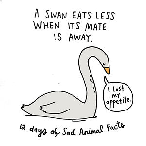on the seventh day of christmas my true love gave to me one lonely swan
