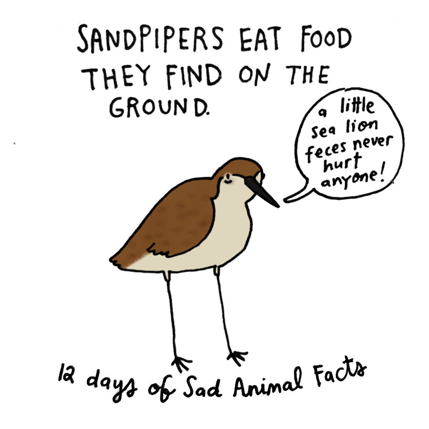 On The Eleventh Day Of Christmas My True Love Gave To Me: Eleven Sandpipers Piping