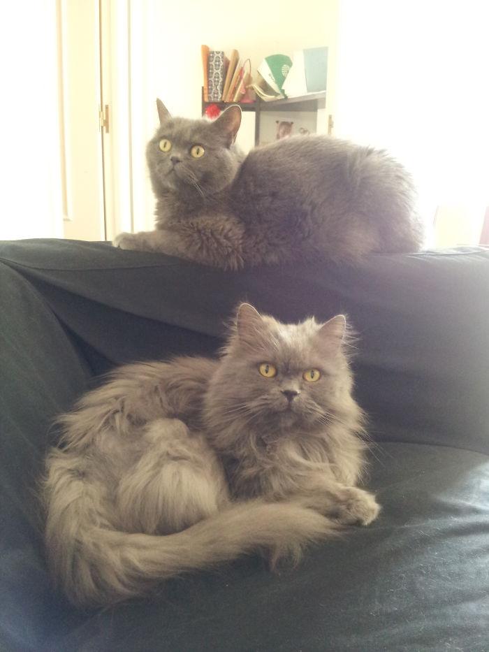 Murphy & Toshio, Grey Lovely Brodas. 2